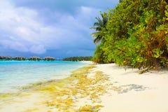 Zandig strand van de Maldiven Stock Fotografie