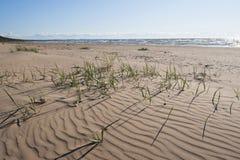 Zandig strand van de Oostzee Stock Afbeelding