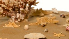 Zandige achtergrond met shells en zeester, wit, omwenteling stock video