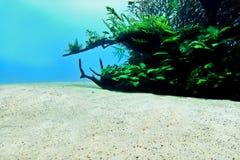 Zandige bodem onderwater, aard achtergrondtextuur royalty-vrije stock afbeeldingen