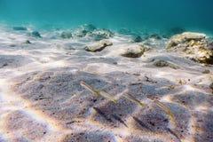 Zandige bodem, vissen onderwater zwemmen royalty-vrije stock afbeeldingen