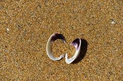 Zandige, open tweekleppige shell, de zijn die helften half met zand worden gevuld stock foto's