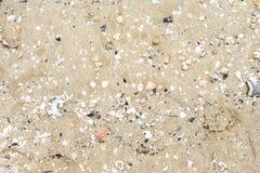 Zandige oppervlakte met shells en kiezelstenen stock foto