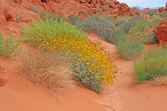 Zandige weg door Vallei van Brand, Nevada Royalty-vrije Stock Afbeeldingen