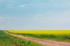 Zandige weg onder gebieden van bloeiend raapzaad Royalty-vrije Stock Afbeelding