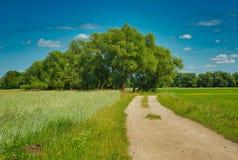 Zandige weg onder groene weiden en gebieden en de zomer stock fotografie