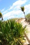 Zandige weg op strand Royalty-vrije Stock Afbeeldingen