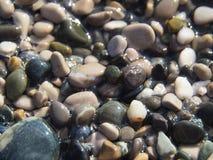 Zandkiezelsteen royalty-vrije stock foto's