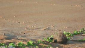 Zandkrab op het strand stock video