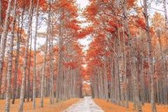 Zandsteeg met bomen op een zonnige dag in de herfst Stock Afbeelding