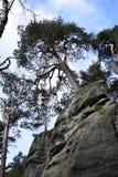 Zandsteenklippen in Boheems Paradijs - de Prachov-Rotsen - Boom op Bovenkant royalty-vrije stock afbeeldingen