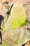 Zandsteentribune op elkaar met mos op de steen Stock Foto