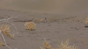 Zandstorm in de woestijn stock videobeelden