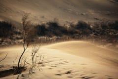 Zandstorm in woestijn Stock Afbeelding