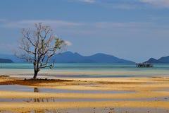 Zandstrook en mangorve boom Royalty-vrije Stock Fotografie