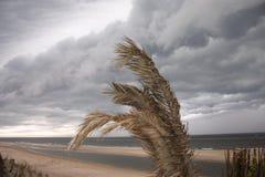 Zandvoort_013 Stock Images