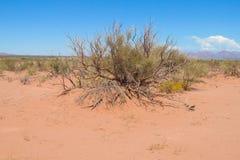 Zandwoestijn met droge struik royalty-vrije stock afbeelding