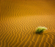 Zandwoestijn met gras Stock Fotografie