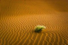 Zandwoestijn met gras Royalty-vrije Stock Fotografie