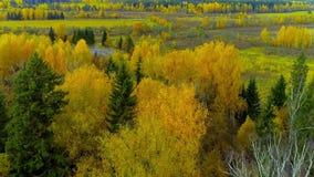 Zangão brilhante do helicóptero da opinião do ar da cor vermelha de amarelo alaranjado da queda da floresta do outono video estoque