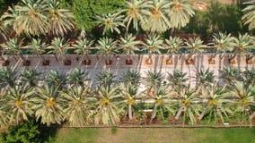 Zangão de voo sobre um alea bonito da palma no parque filme