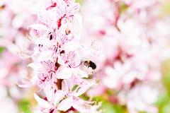 Zangão do voo perto da flor Imagem de Stock