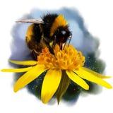 Zangão em uma flor ilustração stock