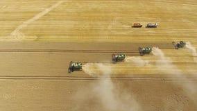 Zangão maduro do trigo da colheita da ceifeira filme