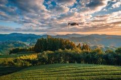 Zangão moderno com voo da câmera sobre o Mt Fuji com campo do ch? verde no nascer do sol em Shizuoka, Jap?o fotos de stock royalty free