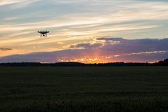 Zangão mostrado em silhueta contra o por do sol alaranjado Imagem de Stock Royalty Free