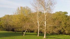 Zangão que abaixa de cima das árvores para a grama verde vídeos de arquivo