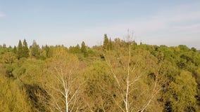 Zangão que move-se acima das árvores sobre o campo de grama verde vídeos de arquivo
