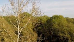 Zangão que move-se para árvores sobre o campo de grama verde filme