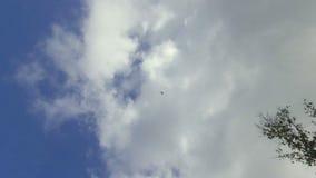 Zangão que voa acima da praia, Seychelles filme