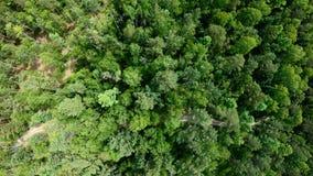 Zangão que voa para a frente acima do tiro vertical aéreo da floresta verde bonita filme