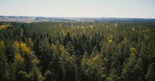Zangão que voa rapidamente sobre a opinião larga bonita da floresta O fundo 4K fantástico aéreo disparou das árvores e da skyline video estoque