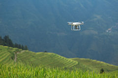 Zangão que voa sobre o campo do arroz Imagem de Stock