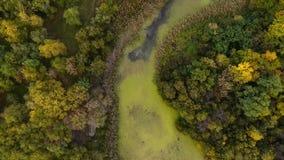 Zangão que voa sobre o pântano no parque video estoque