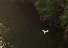 Zangão que voa sobre o rio Fotografia de Stock Royalty Free