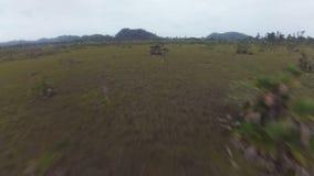 Zangão que voa sobre o savana da selva em América Central video estoque
