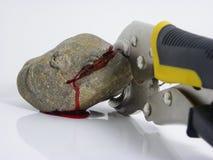 Zangen, die Blut von einem Stein zusammendrücken Stockbild