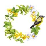 Zangvogel, weidebloemen, gras Bloemen cirkelframe Watercolourkroon royalty-vrije stock fotografie
