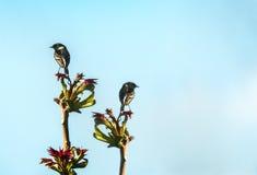 zangvogels Royalty-vrije Stock Afbeelding