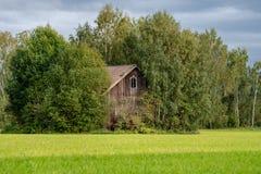Zaniechana drewniana stajnia w jaskrawym świetle słonecznym, stoi przy końcówką zielony pole, kompletnie przerastającą bujny ziel obrazy royalty free