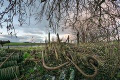 Zaniechana ośniedziała stara rolna maszyneria pod drzewem w holenderskiej wsi obrazy stock