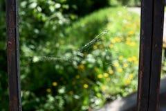Zaniechana pajęczyna w ogródzie Zdjęcie Stock