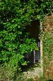 Zaniechani drzwi Zdjęcia Stock