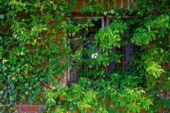 Zaniechani okno Zdjęcia Stock