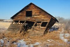 Zaniechani starzy świrony w opóźnionej zimie fotografia stock
