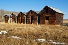 Zaniechani starzy drewniani świrony w opóźnionej zimie obraz stock